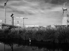 16-000_549 (gyjishukke) Tags: chantier grue oiseau etang eau bw