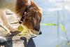 Das sieht aber nass aus da unten... (Adam Riese) Tags: deutschland 201608müritzbollewick mecklenburgvorpommern müritznationalpark damerow jabelschersee pentaxk3 urlaub jabel de kooikerhondje