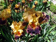 Flores / Flowers (Rafa Gallegos) Tags: realjardinbotnico royalbotanicgardens madrid espaa spain flores flowers naturaleza nature