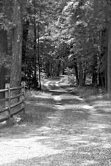 _DSC0012 (-Simulacrum-) Tags: nikond5300 nikonnature nikon foresttrail forestfloor forest creative nature ilovenature
