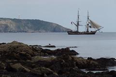 Phoenix (Grumpy O M) Tags: 2masted brig sail sea rocks seagull headland daymark olympusstylus1
