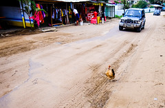 Chicken Crossing (jolom) Tags: moz vacation outdoor road chicken