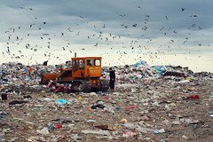Feeding Landfills | Love Food Not Waste (AdelaNistora) Tags: dumpsite garbage dump trash landfill landfillsite foodwaste environment environmentalimpact climatechange waste wastemanagement romania timis birds scavengingbirds methane landfillcompactor caterpillar tractor rubbish lovefoodnotwaste