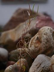 Tender embrace (heinrich_511) Tags: plants plant stone heart stones hugs delicate embrace tender abrazo abrazos zart