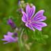 Flower Test Elements 8