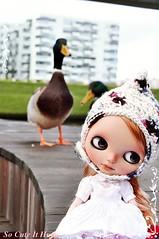 Keni and ducks