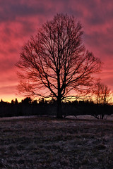 Red Sky at Night, A Sailor's Delight (flashfix) Tags: sky ontario canada tree na