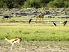 Botswana Hunting Safari 46