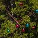 Trees_of_Loop_360_2014_049