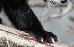 1464 (Jasper Kyodaina) Tags: man guy feet giant paw squish sole stomp crush giantess trample