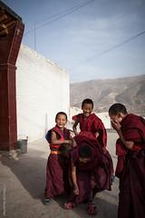 young monks 2 (nicelnicel) Tags: china boy boys young monk tibet monastery monks tibetan qinghai tongren