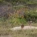 """O Dragão de São Francisco - São Francisco do Sul/SC - 22/11/2014 • <a style=""""font-size:0.8em;"""" href=""""http://www.flickr.com/photos/39546249@N07/15852654561/"""" target=""""_blank"""">View on Flickr</a>"""