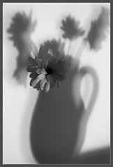 shadows (Vanili11) Tags: 15challengeswinner shadows vase beginnerdigitalphotographychallengewinner abstract