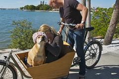 Katie gets festive (METROFIETS) Tags: beach bike bicycle florida bikes sarasota beachbike cargobike beachcruiser enjoytheride bikelife metrofiets keepriding bikesrq palmtreesandbikes