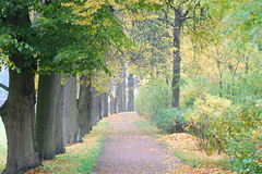 DSC_0835 (Taurus_tlt) Tags: autumn nature rain day petersburg