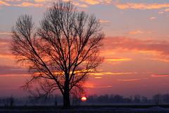 Winter sunset (flubatti) Tags: