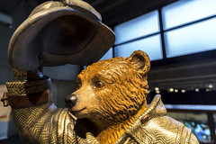 Sherlock Bear by designed by Benedict Cumberbatch (No 34) (SarahO44) Tags: bear city uk england london peru hat statue wall museum canon movie unitedkingdom coat united kingdom indoor trail paddington inside paws briefcase 34 marmalade sherlock 6d toggle benedict duffle nspcc cumberbatch paddingtontrail