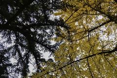 Intrecci (Robi Cere (no todos los das)) Tags: autumn trees italy parco alberi flora italia verona autunno autunnale