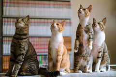 What's going on (rampx) Tags: standing cat tabby kittens neko   miaw