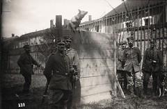 Diensthundeschule - 1918 (Paranoid_Womb) Tags: soldier army war postcard wwi ak german weapon imperial soldiers ww1 1914 1915 greatwar 1917 1918 1916 weltkrieg