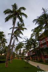 Punta Cana (Kusi Seminario) Tags: hotel dominicanrepublic deluxe palace palmeras palmtree caribbean puntacana republicadominicana caribe barcelo