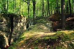 Ausblick auf die goldene Haube (One-Basic-Of-Art) Tags: sun nature forest bayern bavaria spring natur grn sonne wald bume baum oberpfalz frhling beratzhausen 1basicofart annewoyand goldehaube