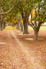 20160506_8150_1D3-40 The track beside the park (127/366) (johnstewartnz) Tags: autumn newzealand christchurch fall leaves canon 40mm 1740mm 1740 apsh bishopdale onephotoaday 1dmarkiii 1d3 1dmark3 project366 nunweekpark onephotoaday2016