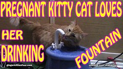 Pregnant Kitty Cat Loves Her Drinking Fountain (youtube.com/utahactor) Tags: red orange cute water fountain yellow electric tongue cat canon ceramic mackerel ginger video chat tabby watch pregnancy drinking adorable like kitty fluffy pregnant fresh follow clean whiskers charcoal precious gata hd athena darling share furbaby subscribe ebi filtered youtube friendsofzeusandphoebe gingerkittiesfour
