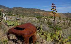 jerome, az (redrock flyer) Tags: yucca centuryplant jeromeaz