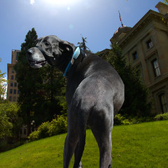 Great Dane (swong95765) Tags: sky dog building grass foreboding library hill lawn greatdane imcline