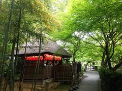 Peaceful forest (brisa estelar) Tags: trees green nature temple buddhism deity adashino nenbutsu mizujizo