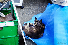 Today's Cat@2016-05-22 (masatsu) Tags: cat pentax catspotting mx1 thebiggestgroupwithonlycats