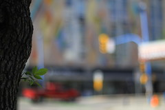 City Centre (Tracy Christina) Tags: truck red bokeh tree leaf trafficlight building colourful intersection blur