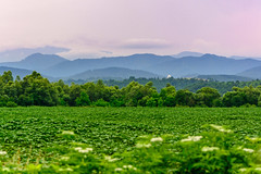 Landscape - the magical beauty of Bulgaria (renkata23) Tags: summer mountain plant mountains green field grass clouds landscape nikon scenery colorful outdoor hill scene hills land mountainside grassland magical hilly magicmoment beautifulmoment beautifullandscape nikonbulgaria