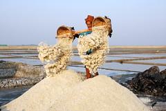 Salt produce in Cox's Bazar (akhlas_viewfinder) Tags: asian asia bd bangladesh coxsbazar saltfield teknaf cox'sbazar saltfarmer saltfarming coastalareaofbangladesh saltproduce