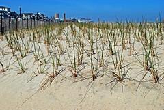 dune grass (BehindBlueEyes) Tags: beach newjersey nj monmouthcounty oceangrove