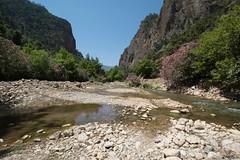 Peloponnese Peninsula, Greece (gillian.pullinger) Tags: greece peninsula oleander peloponnese