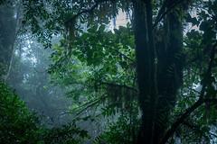 20160525-DSC_3543 (isabelle.kirsch) Tags: viet nam langbian dalat trail forest cloud fog
