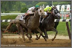 Creator wins the Belmont Stakes (Spruceton Spook) Tags: horses horseracing creator destin belmontpark belmontstakes iradortizjr