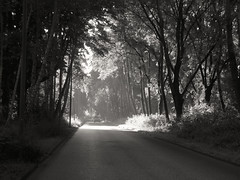 Car on the road in the forest (STEHOUWER AND RECIO) Tags: car road forest light shadows bw blackandwhite netherlands vrijenburgerbos bos trees nature black white dutch scenery woods transport perspective atmosphere mood leaves morning early holland nederland mono monochrome
