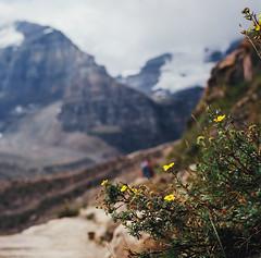 canada revisited, part one (manyfires) Tags: canada film analog mediumformat landscape honeymoon hiking path roadtrip hike hasselblad trail banff wildflowers banffnationalpark hasselblad500cm plainofsixglaciers