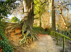 Eroded Tree Roots (Beardy Vulcan) Tags: winter england january somerset 2016