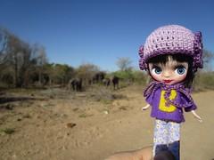 MissB spotted the elephants first! (MissLAndMrH) Tags: petite blythe missb elephants krugerpark