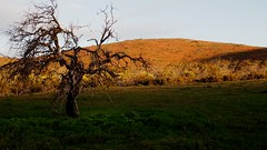 Chillunie, Gawler Ranges National Park (PR Day) Tags: gawlerranges southaustralia outback sunset rock