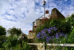 Agapanthus Steps (Nanny Bean) Tags: runswickbay northyorkshire seaside cottage bay sand clouds boat agapanthus steps