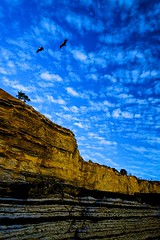 Pelicans over the Sunset Cliffs (eikonologos.images) Tags: sandiego myfujifilm sunsetcliffs pelican