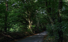 Woodland drive (Ollie_57.. on/off) Tags: landscape flora trees woods woodland nature light shadow leaves road lane canon ef24105mm 7d summer sept 2016 teignmouth devon westcountry england uk photomatix hdr affinityphoto ollie57 green hggt