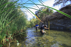 CSUC Snorkel Survey