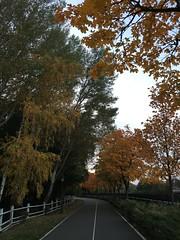 #view #nature #embankment #dniproriver #alley #maple #sunset #autumn #october #gold #leaves #paradise #honka #mezhyhirya #nationalpark #corruptionmuseum #newpetrivci #ukraine #shotoniphone #iphonegraphy #iphone6s (RT_ArtLabStudio) Tags: view nature embankment dniproriver alley maple sunset autumn october gold leaves paradise honka mezhyhirya nationalpark corruptionmuseum newpetrivci ukraine shotoniphone iphonegraphy iphone6s