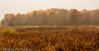 _MG_0884 (sbogden) Tags: nature treesinfog fallmorning foggyfallmorning treesinfall foggyscenery foggyfallscenery